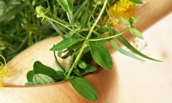 Fresh Aromatic Herbs